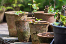 Plants In The Pots, Greenhouse