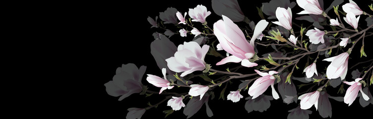 Fototapeta Do kuchni realistic flower, Magnolia branch isolated on black background. Magnolia branch is a symbol of spring, summer, feminine charm, femininity in the style of realism. 3d, volumetric pink flower, backgroun