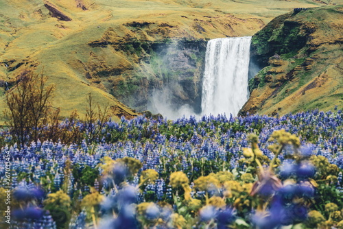 Fototapety, obrazy: Beautiful scenery of the majestic Skogafoss Waterfall in countryside of Iceland in summer. Skogafoss waterfall is the top famous natural landmark and tourist destination place of Iceland and Europe.