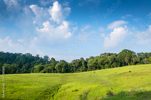 Fotomural  Forest meadow in sunny day