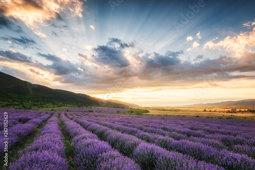 Foto auf Gartenposter Landschappen Lavender field at sunrise / Stunning view with a beautiful lavender field at sunrise