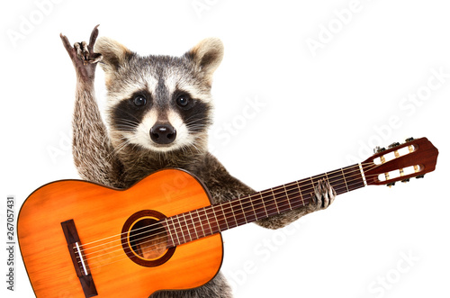 Fototapety, obrazy: Portrait of a funny raccoon with  acoustic guitar, showing a rock gesture, isolated on white background