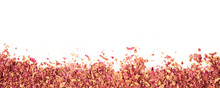 Wide Banner. Dried Rose Petals...