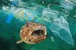 canvas print picture - Plastic pollution in ocean and fish. Micro plastics in ocean contaminate seafood