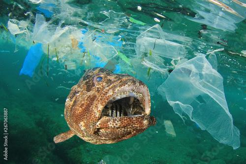 Printed kitchen splashbacks Akt Plastic pollution in ocean and fish. Micro plastics in ocean contaminate seafood