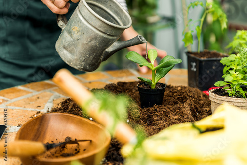 Obraz Watering plants in home garden - fototapety do salonu