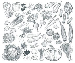 Set ručno nacrtanog svježeg povrća. Predložak za vaše dizajnerske radove. Gravirana stilska vektorska ilustracija.