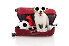 DOG INSIDE A RED MODERN BAGGAGE OR LUGGAGE GOING ON SUMMER VACATIONS WEARING SUNGLASSES. ISOLATED AGAINST WHITE BACKGROUND.