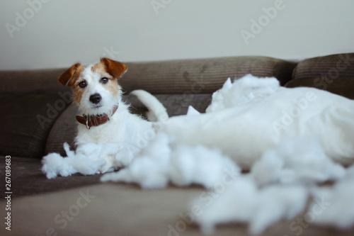 Fotografie, Obraz  FUNNY DOG MISCHIEF