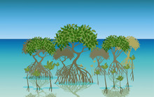Landscape Of Mangrove Forest A...