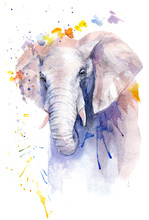Watercolor Drawing Of An Animal - An Elephant In Flowers