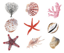 Hand Drawn Beautiful Colorful Watercolor Set Of Seashells, Starfish And Clams Isolated On White Background
