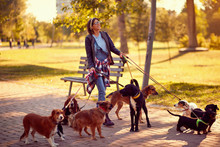 Happy Woman Dog Walker With Do...