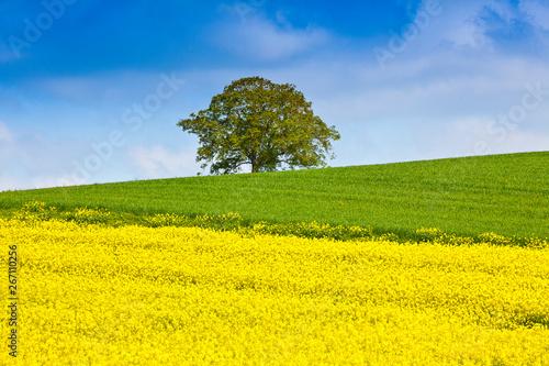 Papiers peints Jaune Arbre seul au milieu du champ