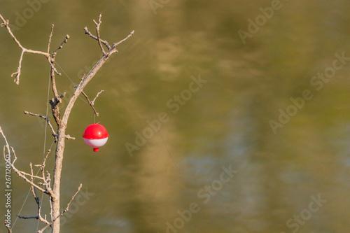 fishing bobber tangled in a tree Fototapet