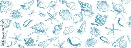 Fotografia Vector seashell banner