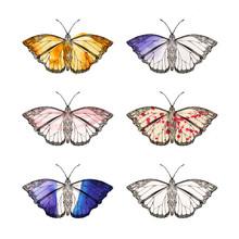 Butterflymood 6