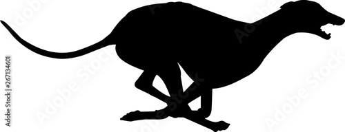 Fotomural Greyhound 6 isolated vector silhouette