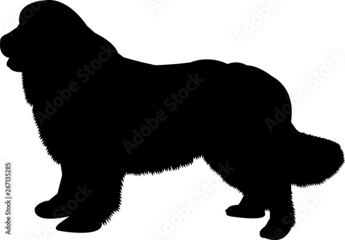Newfoundland 8 isolated vector silhouette Fototapeta