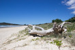 canvas print picture - Baumstamm am Strand in Australien, all you need is love Beschriftung