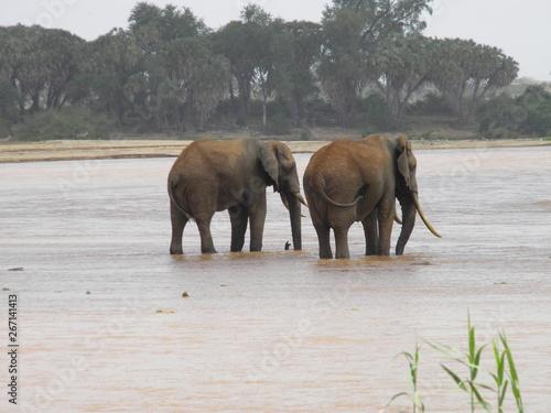 Aluminium Prints Elephant Safari