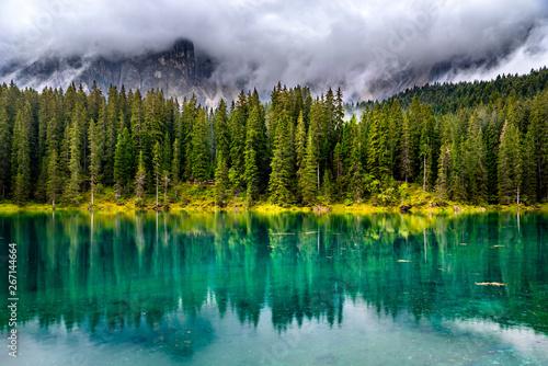 Poster Trees Lago di Carezza