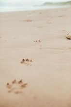 Footprints Of Dog In Beach