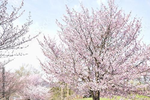 桜の映える天気