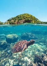 Swimming Turtle In Blue Sea Wa...