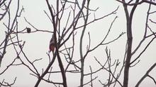 Closeup Of Woodpecker Jumping ...