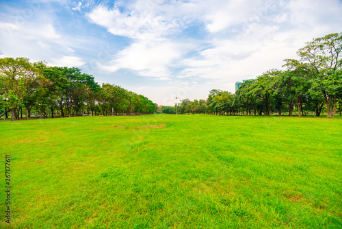 Foto auf Leinwand Straße im Wald Green city public park with meadow and tree sky cloud
