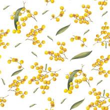 Golden Wattle (Acacia Pycnanth...