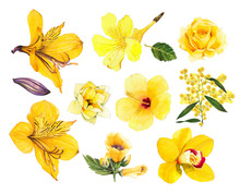 Tropical Yellow Flower Alstroemeria Yellow Orchid Wattle Magnolia Hibiscus Seamless Watercolor On White