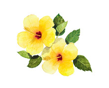 Yellow Hibiscus And Leaves Watercolor Seamless On White