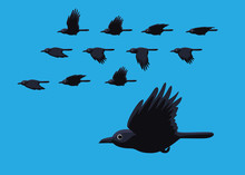 Crow Flying Motion Animation S...