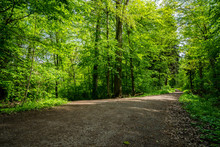 Germany, Forest Track Fork Under Green Trees