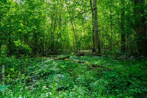 Germany, breathing clean air in green thicket of natural forest in springtime