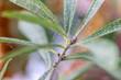 canvas print picture - Spinnmilben haben eine Pflanze befallen