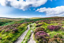 Haworth Moor, Yorkshire