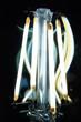 Leuchtioden als Filament aufgebaut geben helles Licht ab.