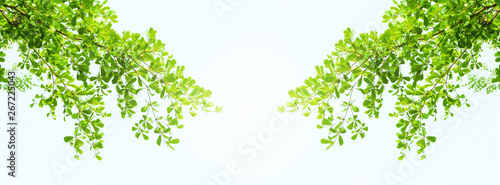 Fotomural  Earth Day concept: green leaves and branches on white background for abstract te