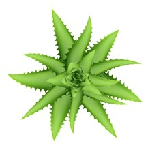 Aloe Vera Plant Top View Icon. Cartoon Of Aloe Vera Plant Top View Vector Icon For Web Design Isolated On White Background