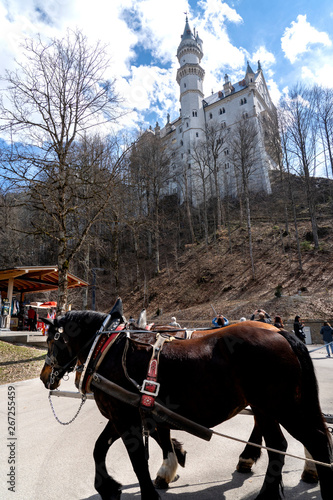 Fototapety, obrazy: Neuschwanstein castle in Bavaria, Germany. Famous castle Neuschwanstein near Alpsee and Nohenschwangau in Bavarian alps. Bayern (Bavaria), Germany.