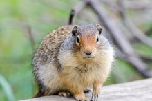 Squirrel On The Shores Of Lake...