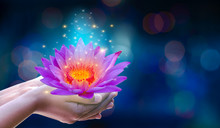 In The Hands Of A Flower Lotus Pink Light Purple Floating Light Sparkle Purple Background