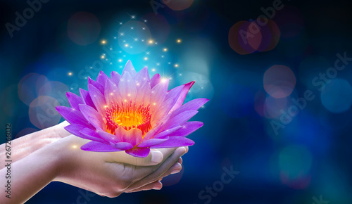Garden Poster Lotus flower In the hands of a flower lotus Pink light purple floating light sparkle purple background