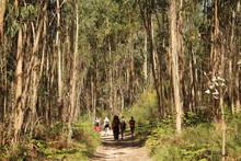 The Way Of Camino De Santiago, Yellow Arrows, Nature, Landscape