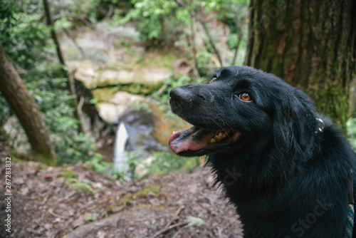Dog Slaughter Falls Hike in Daniel Boone National Forest in Southern Kentucky Wallpaper Mural