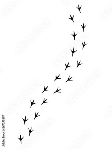 Obraz na płótnie Vector black bird paw steps road isolated on white background
