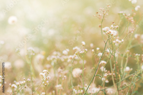 Foto op Plexiglas Weide, Moeras flower field, meadow wild vintage dandelion in summer nature morning grass beauty garden light